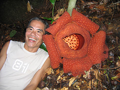 gunung rafflesia